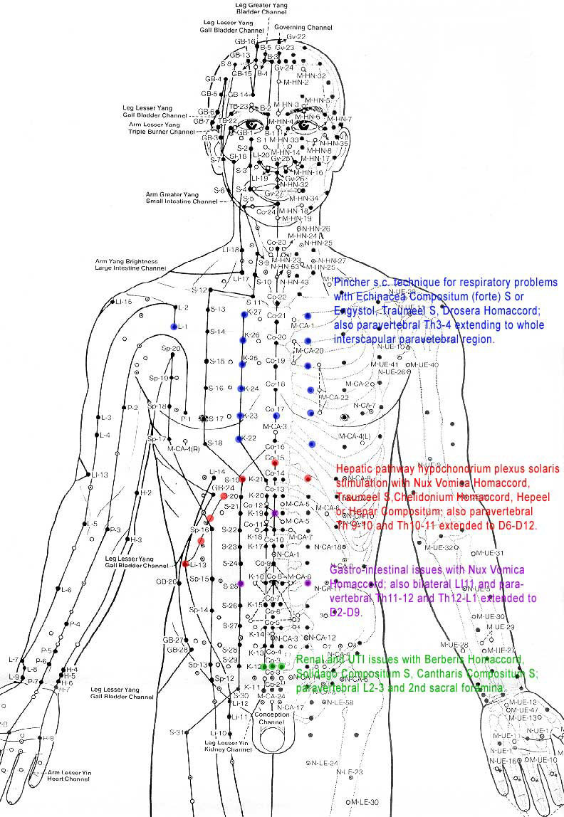 Meridian Charts For Dog Acupuncture http://www.cacitches.com/general/acupressure-meridian-chart.html