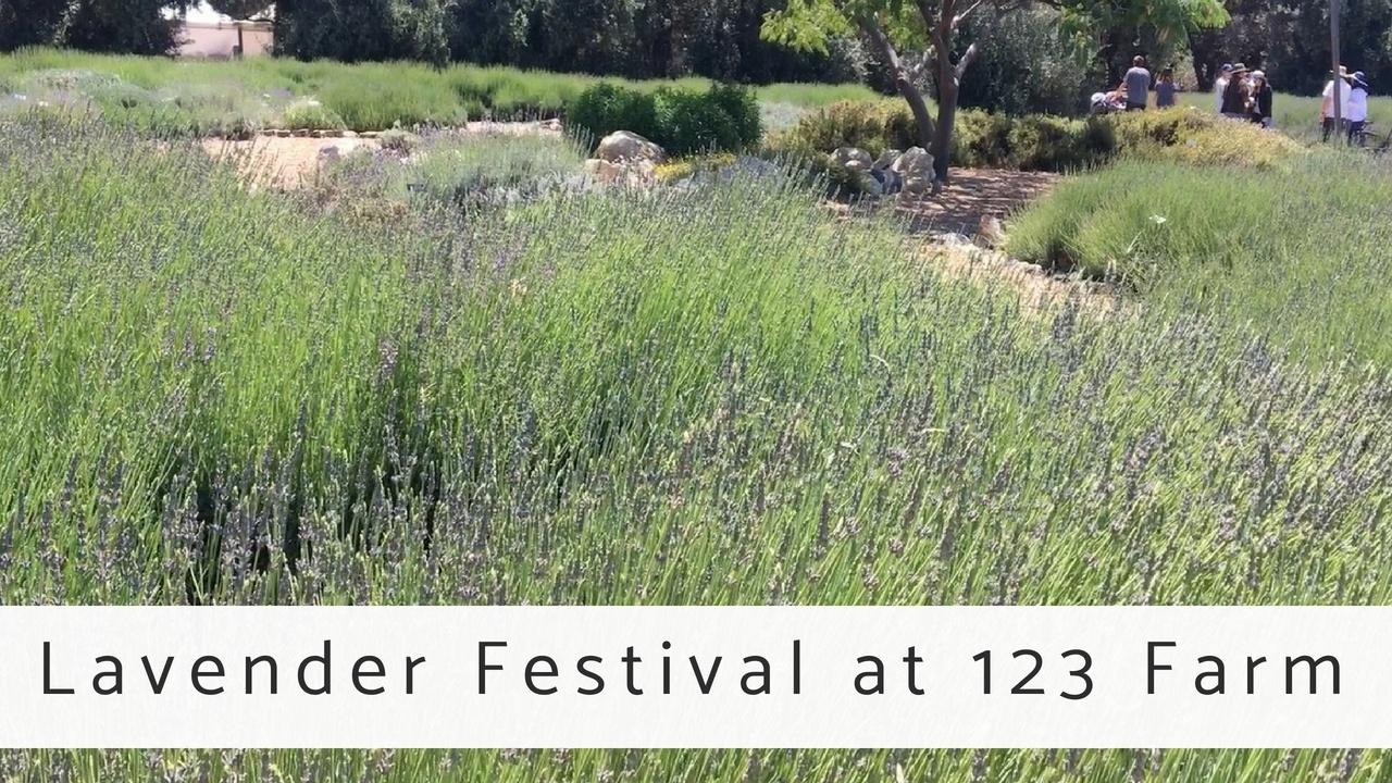 Massage Monday Lavender Festival at 123 Farm